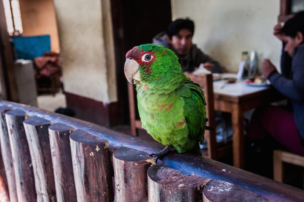Le copain à plumes