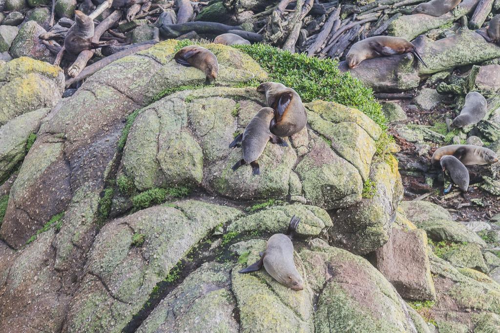 Otaries affalées sur leurs rochers