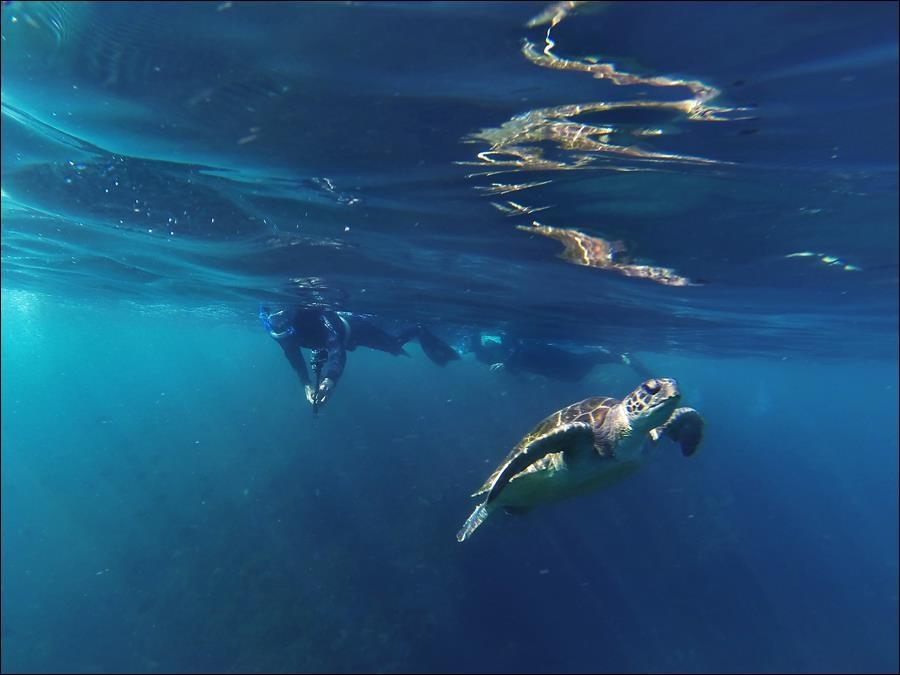 Superbe rencontre lors de notre snorkeling à Byron Bay