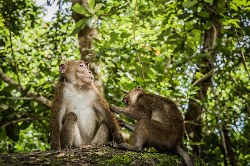 Macaques (Underground River)