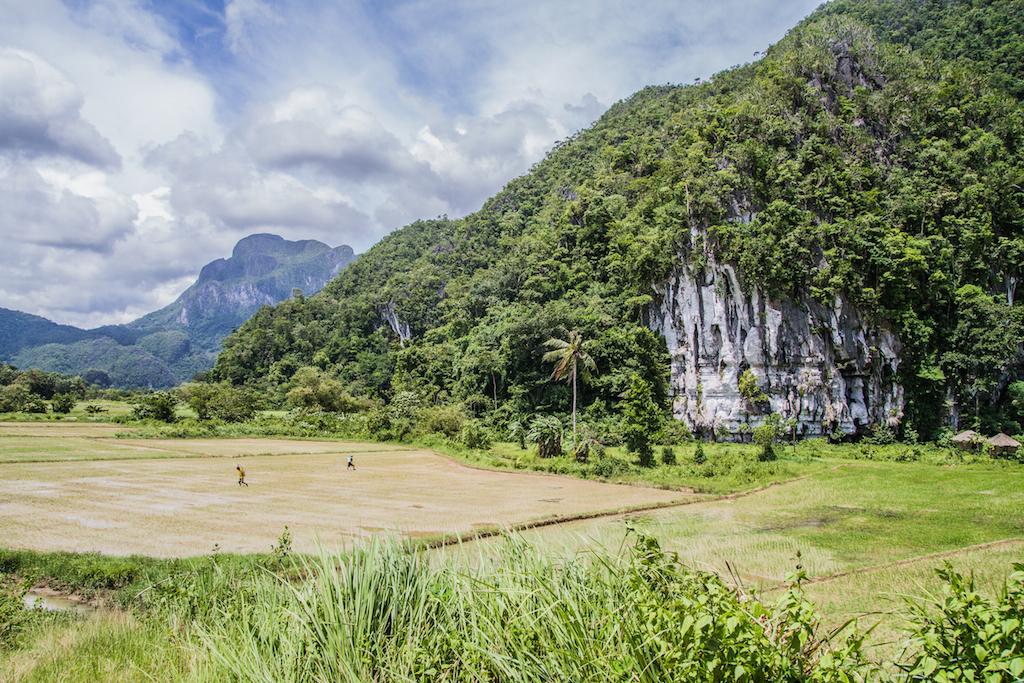 Rizière à Palawan