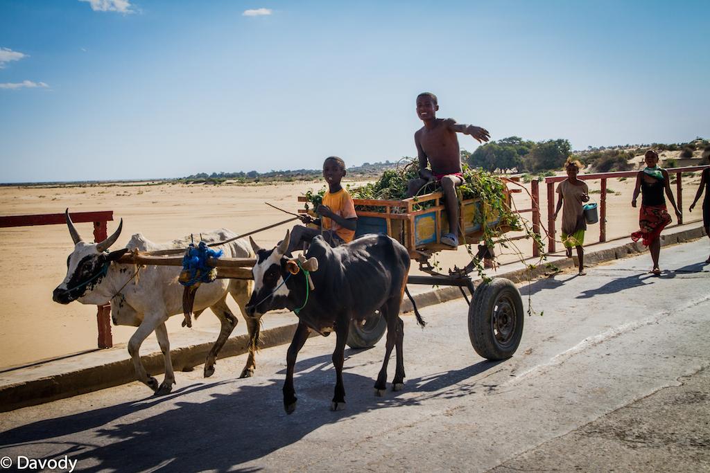 Route de Tuléar à Ifaty