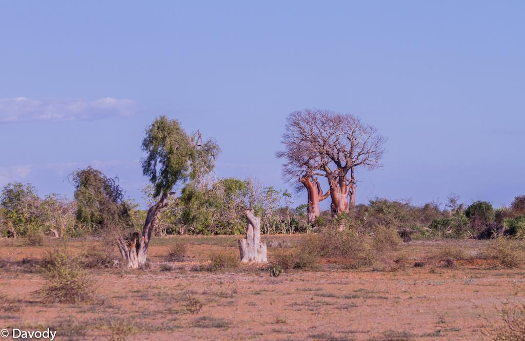 Baobab (Ifaty)